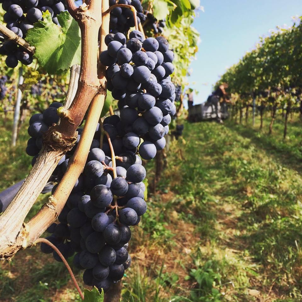 Bellaveder bagno alcione forte dei marmi sabato 15 luglio 2017 god save the wine - Bagno alcione forte dei marmi prezzi ...