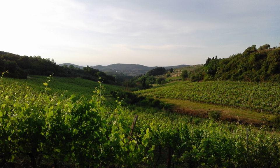Bruscola bagno alcione forte dei marmi sabato 15 luglio 2017 god save the wine - Bagno alcione forte dei marmi prezzi ...