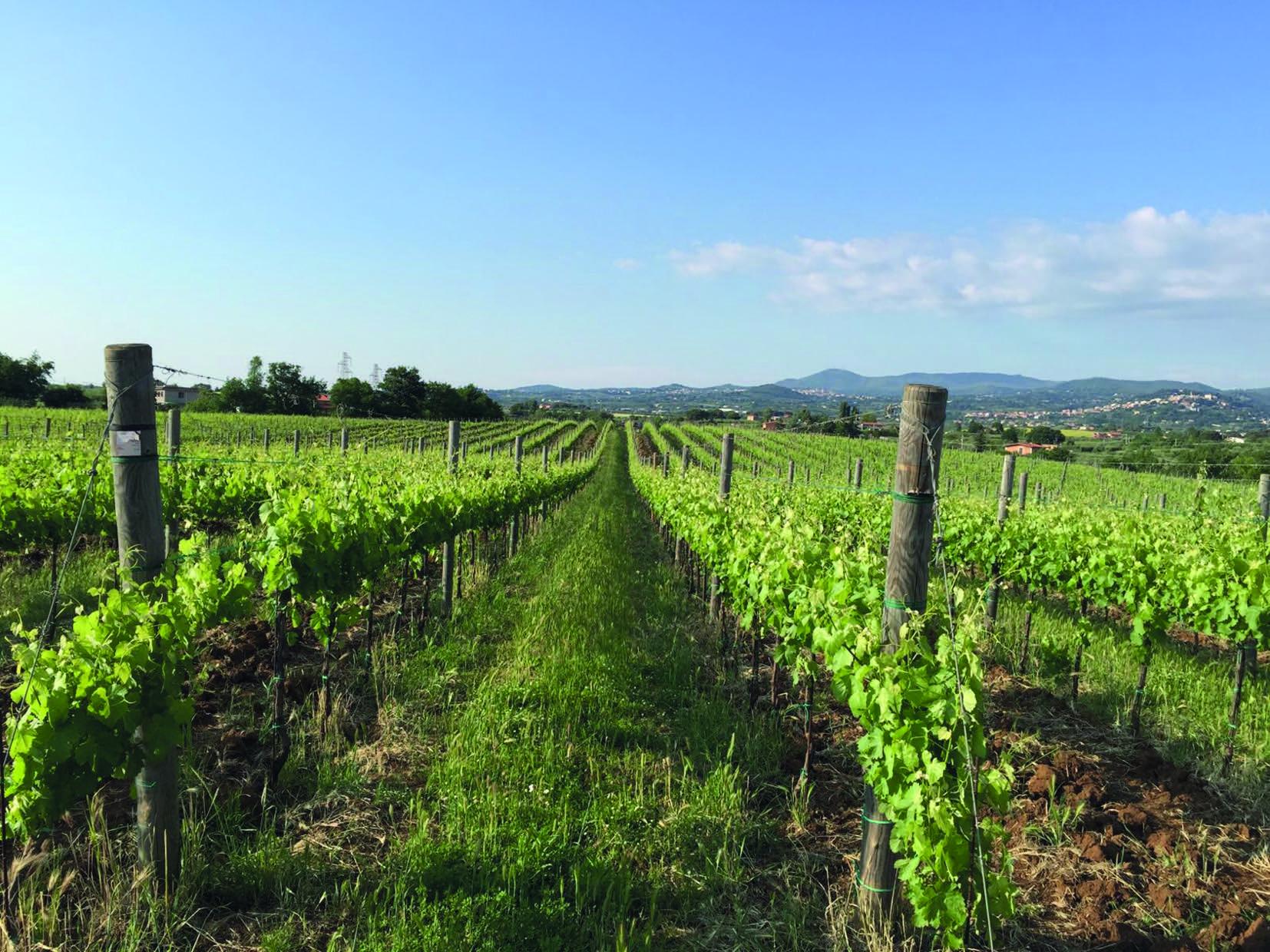 Cantinamena bagno alcione forte dei marmi sabato 15 luglio 2017 god save the wine - Bagno flora forte dei marmi ...